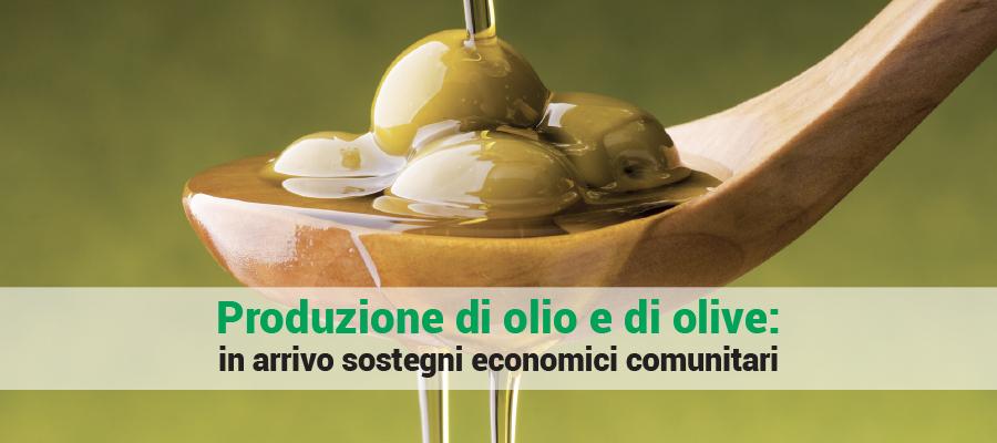 Produzione di olio e di olive: in arrivo sostegni economici comunitari