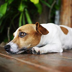 Condominio e cani: cosa succede se abbaiano